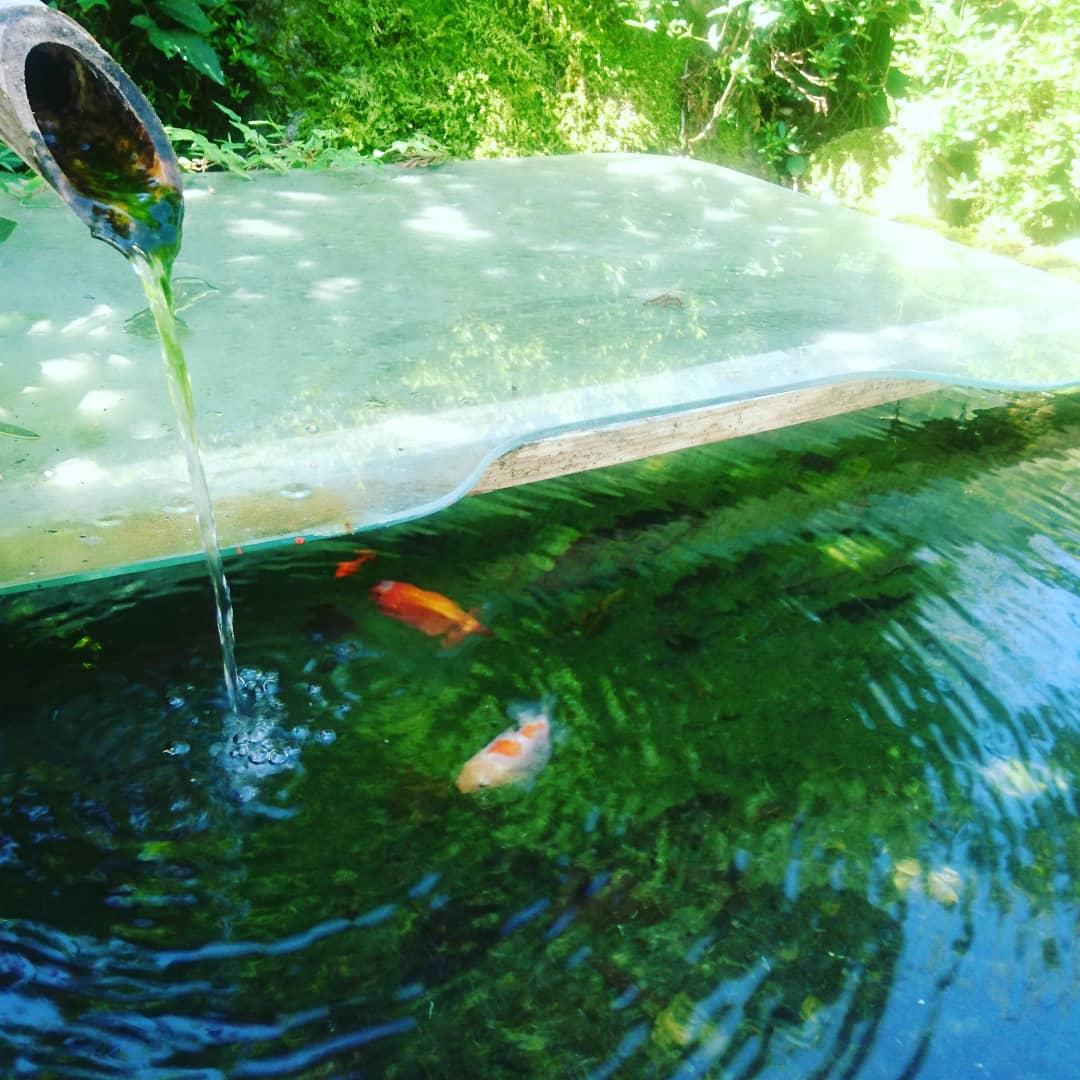神埼市 金魚