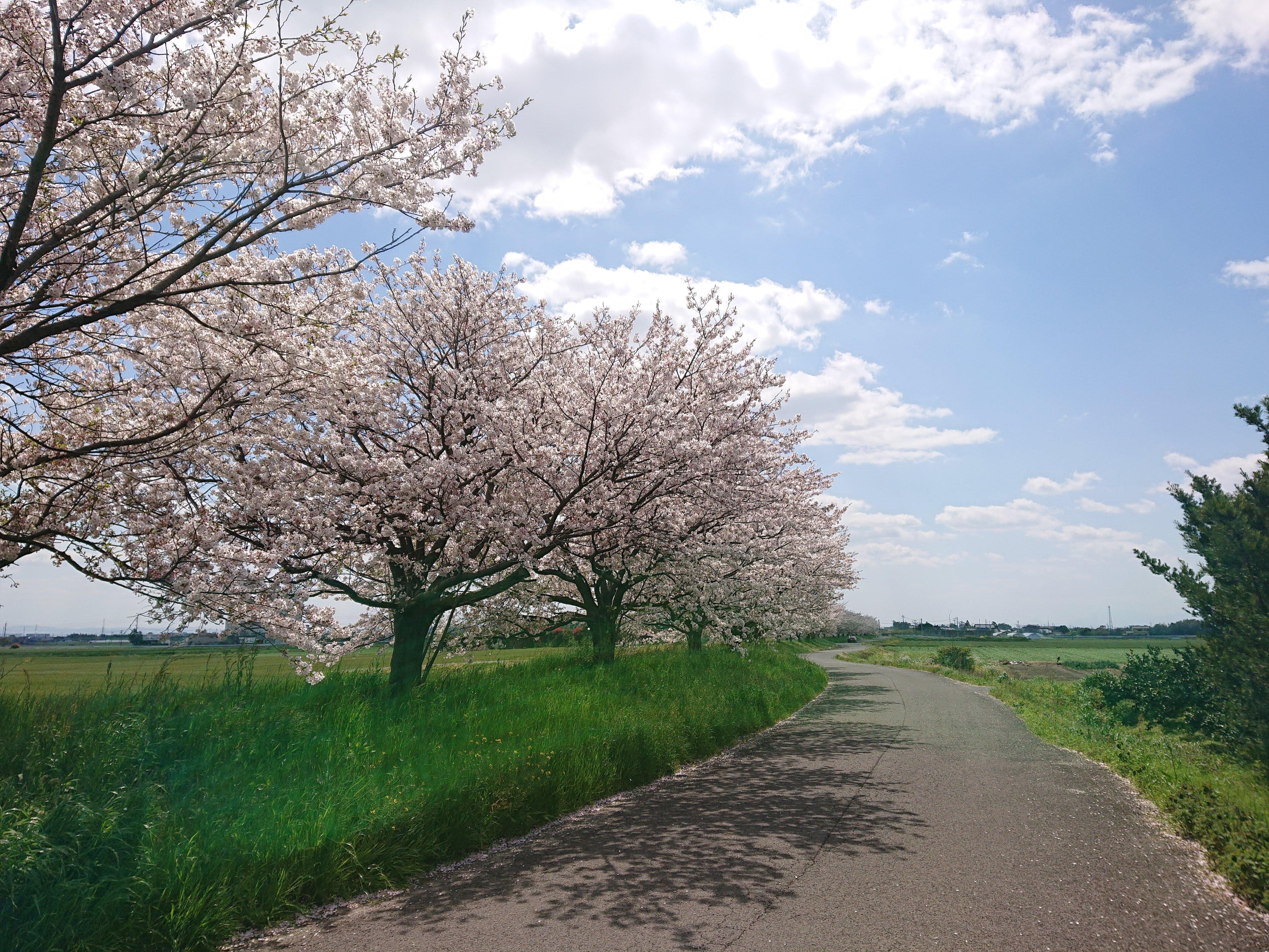 佐賀市大和町 新築建売戸建住宅「OURS川上」桜